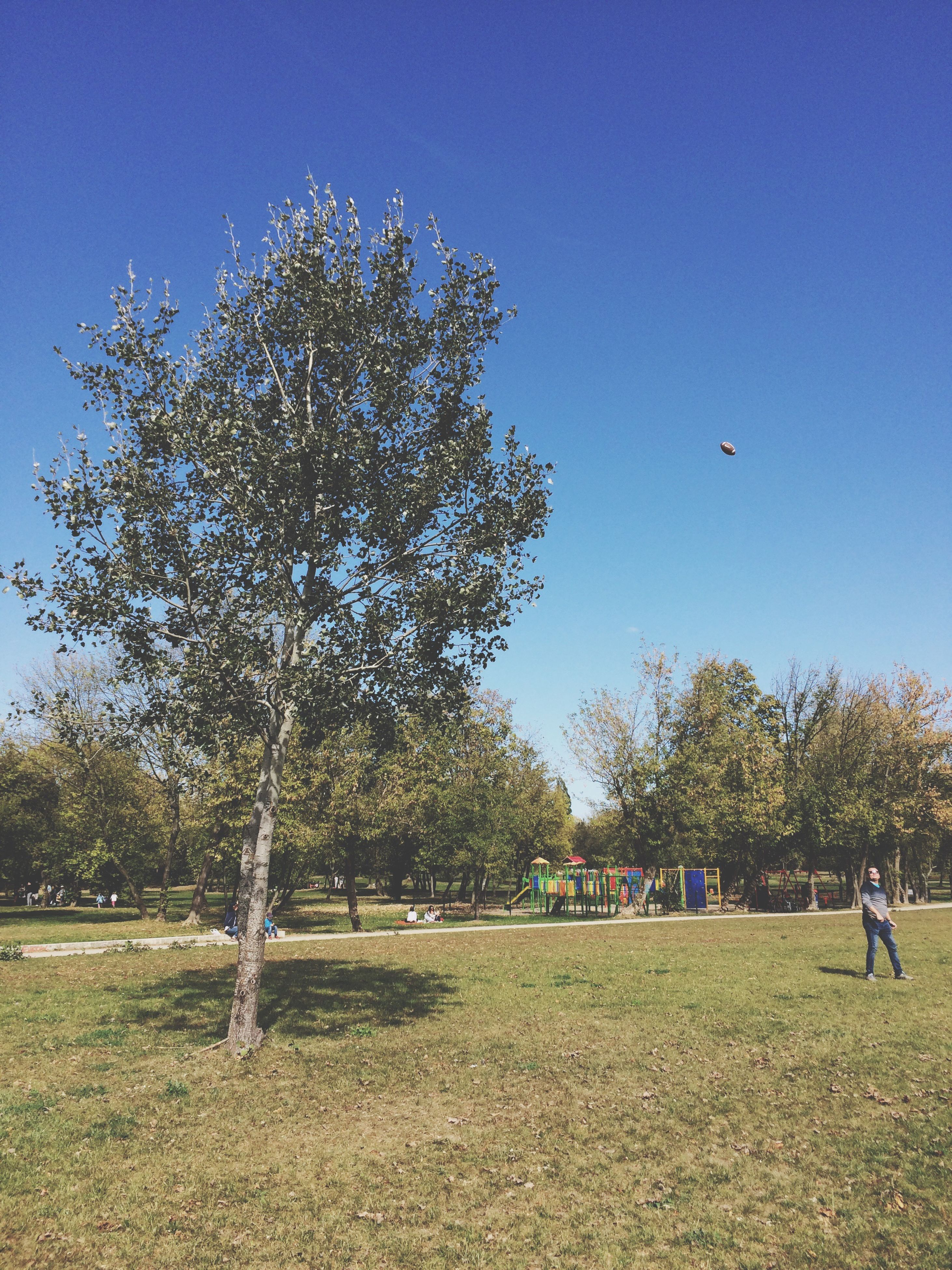 tree, grass, park - man made space, clear sky, leisure activity, lifestyles, growth, men, blue, sunlight, tranquil scene, green color, tranquility, day, park, nature, beauty in nature, relaxation, field, person, scenics, tourism, outdoors, vacations, carefree