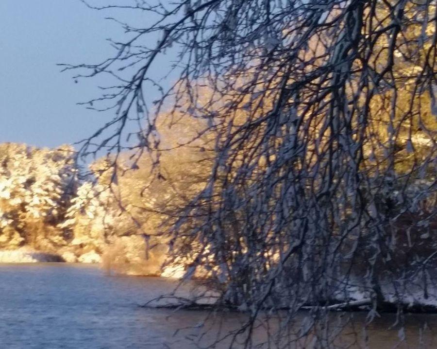Pond Life After The Snowfall