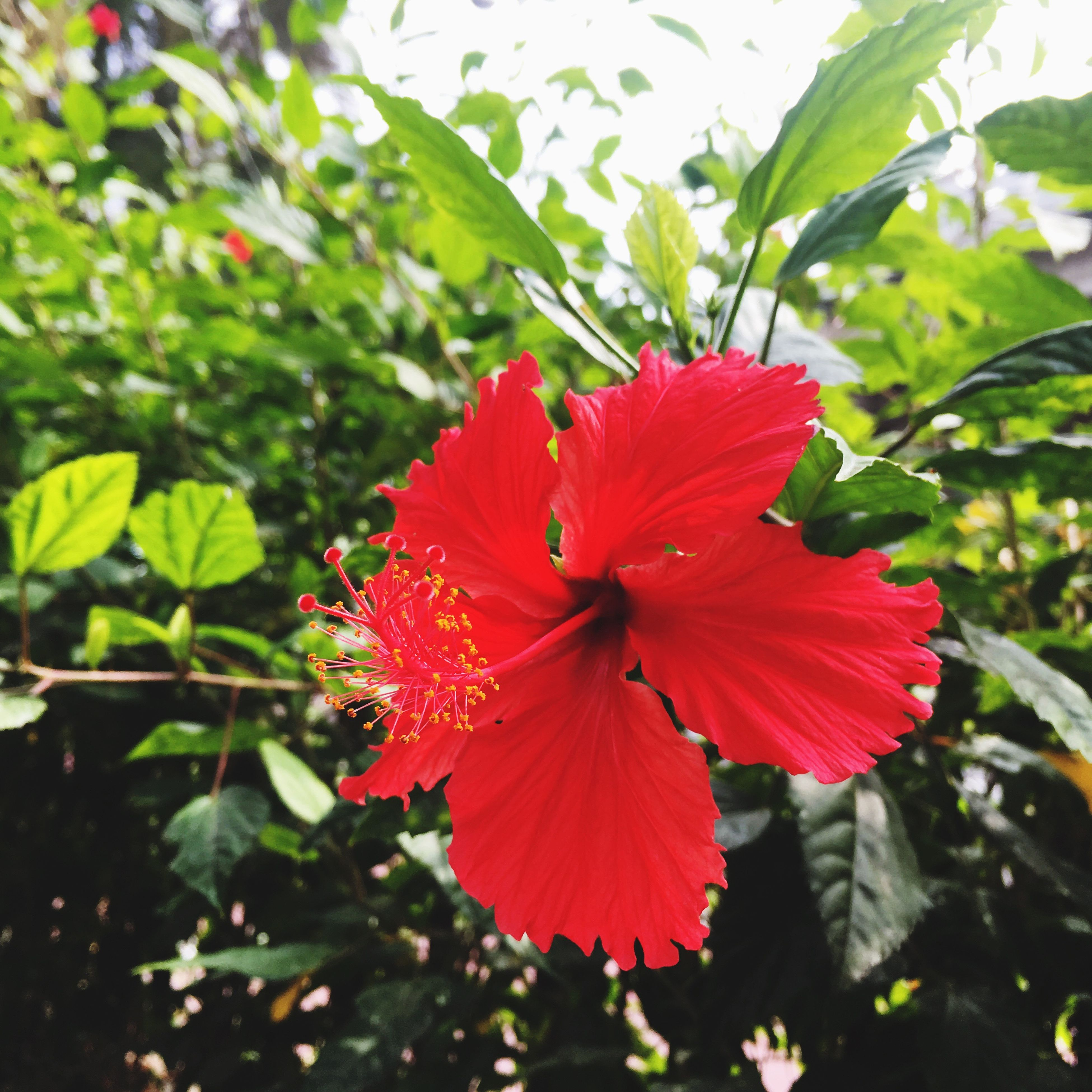 flower, growth, red, petal, nature, fragility, plant, beauty in nature, flower head, blooming, close-up, pollen, green color, freshness, no people, leaf, day, outdoors, pistil
