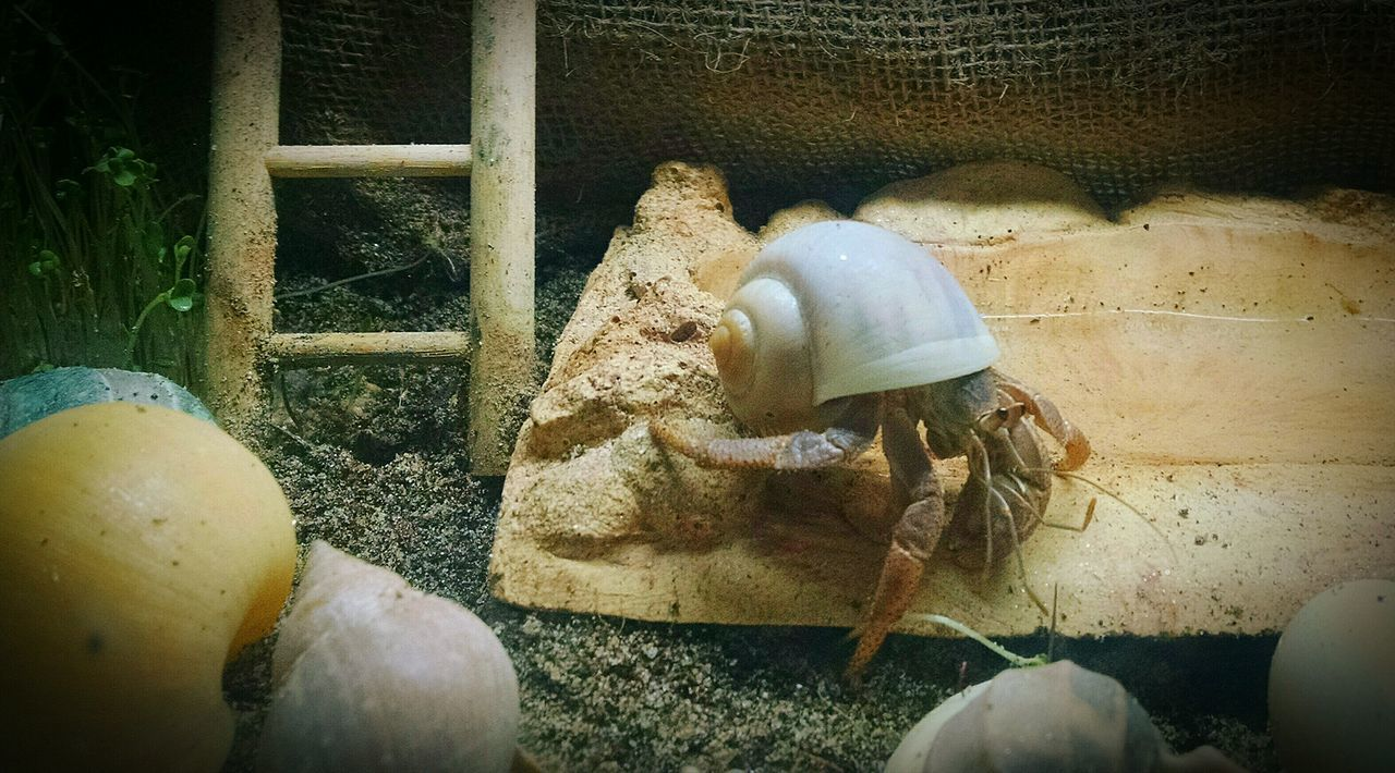 Hermit Crab Domestic Animals Crabby Crab Pets Animal Themes I'm June! Indoors  I'm 10