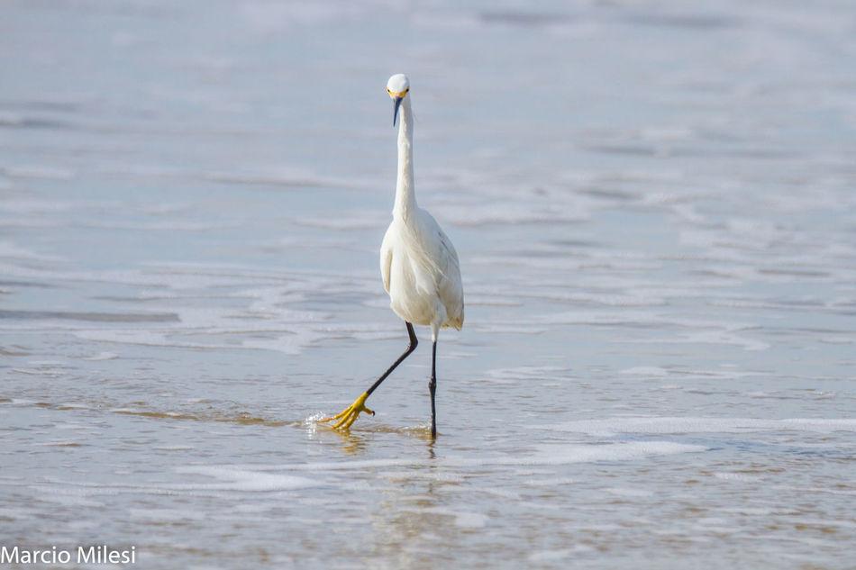 #dancing #elegant Animal Themes Animal Wildlife Animals In The Wild Bird Day Nature No People One Animal Water Waterfront