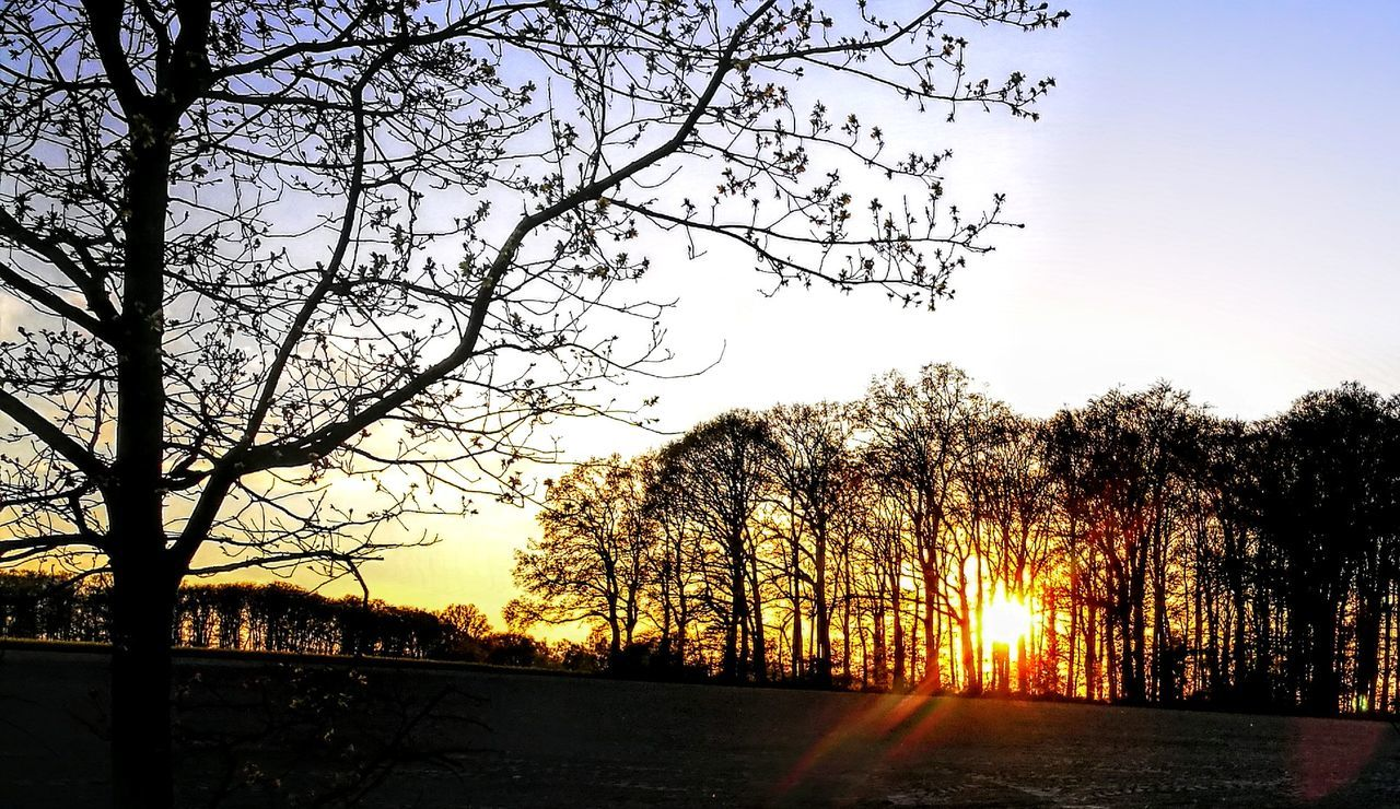 Sunglow in the Wood.... Sunset Tree Silhouette Sky Nature No People Sun Outdoors Beauty In Nature Scenics Day Originalpicture GetbetterwithAlex Landscape Tree Wendland Beauty In Nature