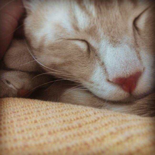 Relaxing Cats Nighty Night  Fluffykitty