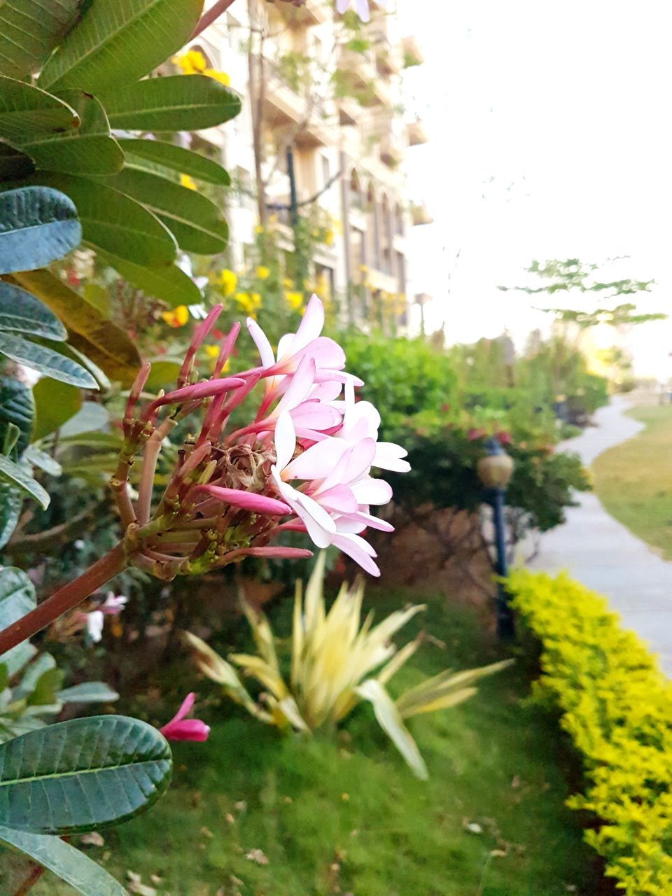flower, nature, growth, beauty in nature, petal, fragility, freshness, plant, day, outdoors, flower head, focus on foreground, leaf, green color, no people, tree, pink color, blooming, close-up