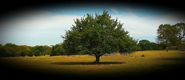 Horse apple tree standing alone in an open field. It never seems to give up. It reminds me to stay strong and keep going. Tree Nature No People Growth Horizontal Sunset Sky Beauty In Nature Outdoors Grass Day Treescollection Trees And Sky Nature Beauty In Nature Tranquility Strength And Courage Fruitfulness