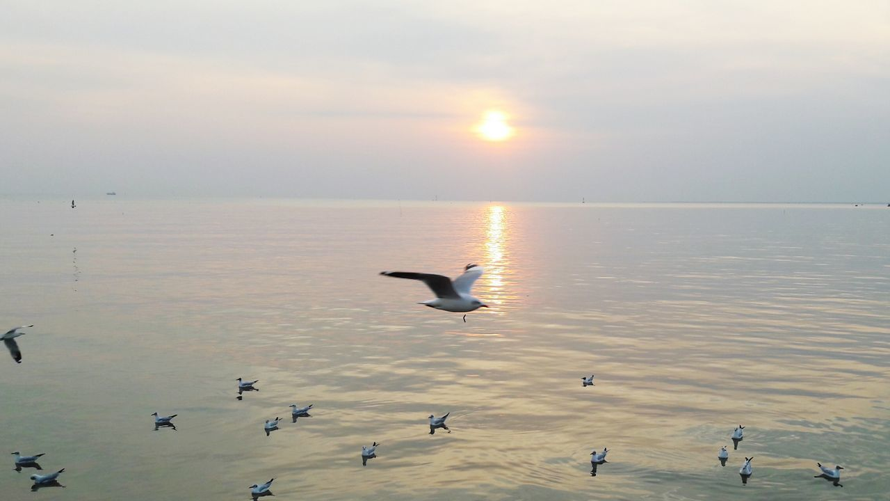 bird, animal themes, animals in the wild, sunset, nature, flying, beauty in nature, animal wildlife, water, sunlight, spread wings, scenics, no people, outdoors, sky, lake, tranquility, large group of animals, day, horizon over water, swan