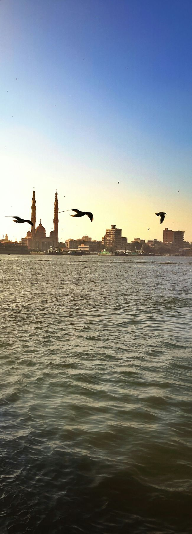 portsaid.canal Masjed