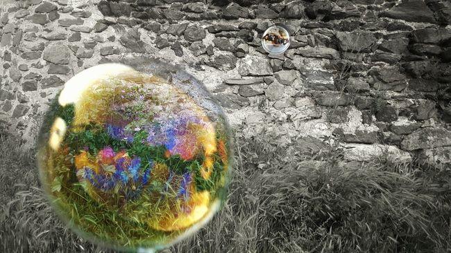 Bubbles Balck And White Nature Colors Baloons Macro Shuffle Caption