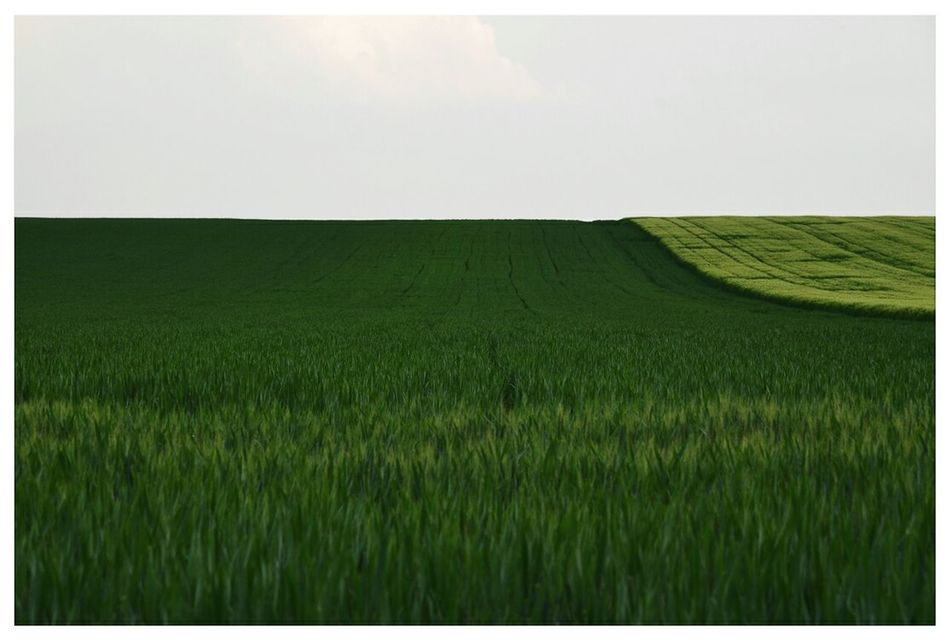 Mint By Motorola Minimal View Landscape Field Landscape_photography Summer Views The Great Outdoors - 2015 EyeEm Awards