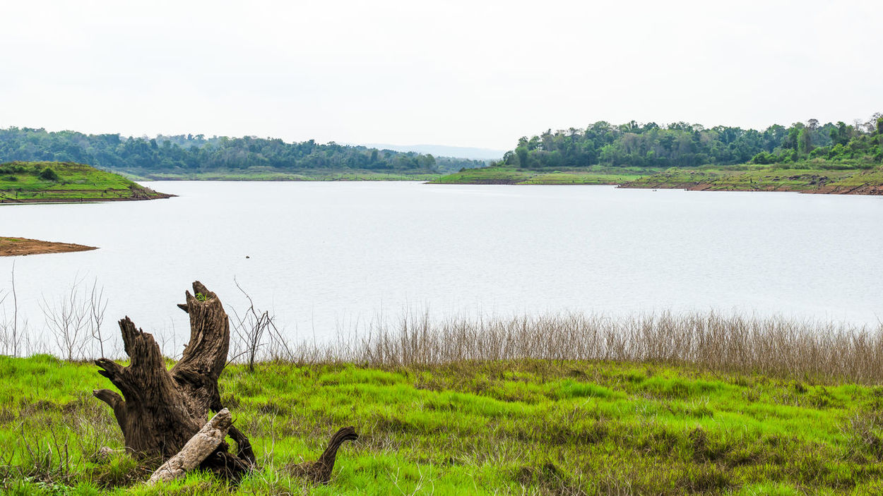 The river is surrounded by mountains., Beautiful Landscape, Beautiful Mountain,river Animal Themes Animals In The Wild Beauty In Nature Bird Day Dead Tree Grass Green Color Growth Lake Landscape Nature No People One Animal Outdoors Plant Scenics Sky Tranquil Scene Tranquility Tree Water Chum Phae,khonkaen,Thailand