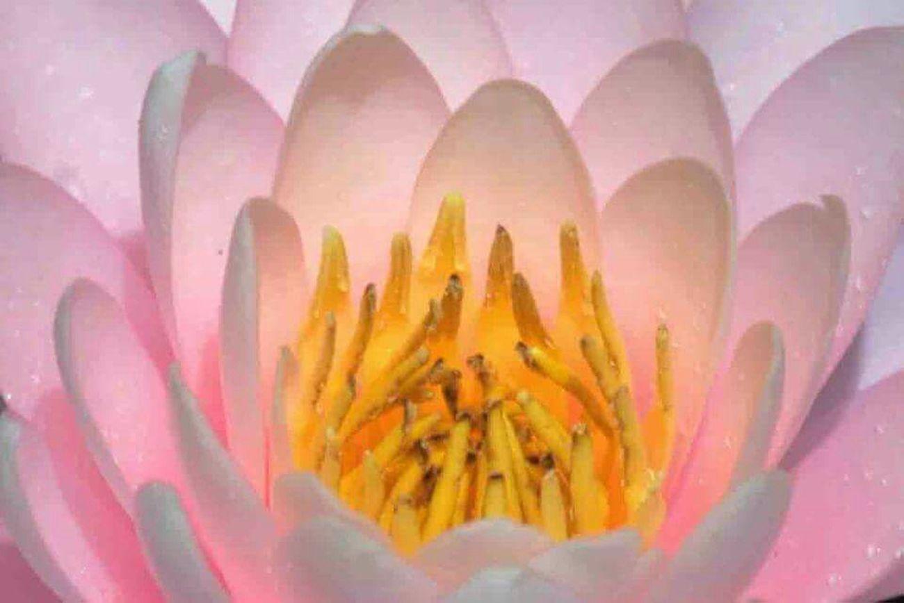 Hortoflorestal Camposdojordao Flowers