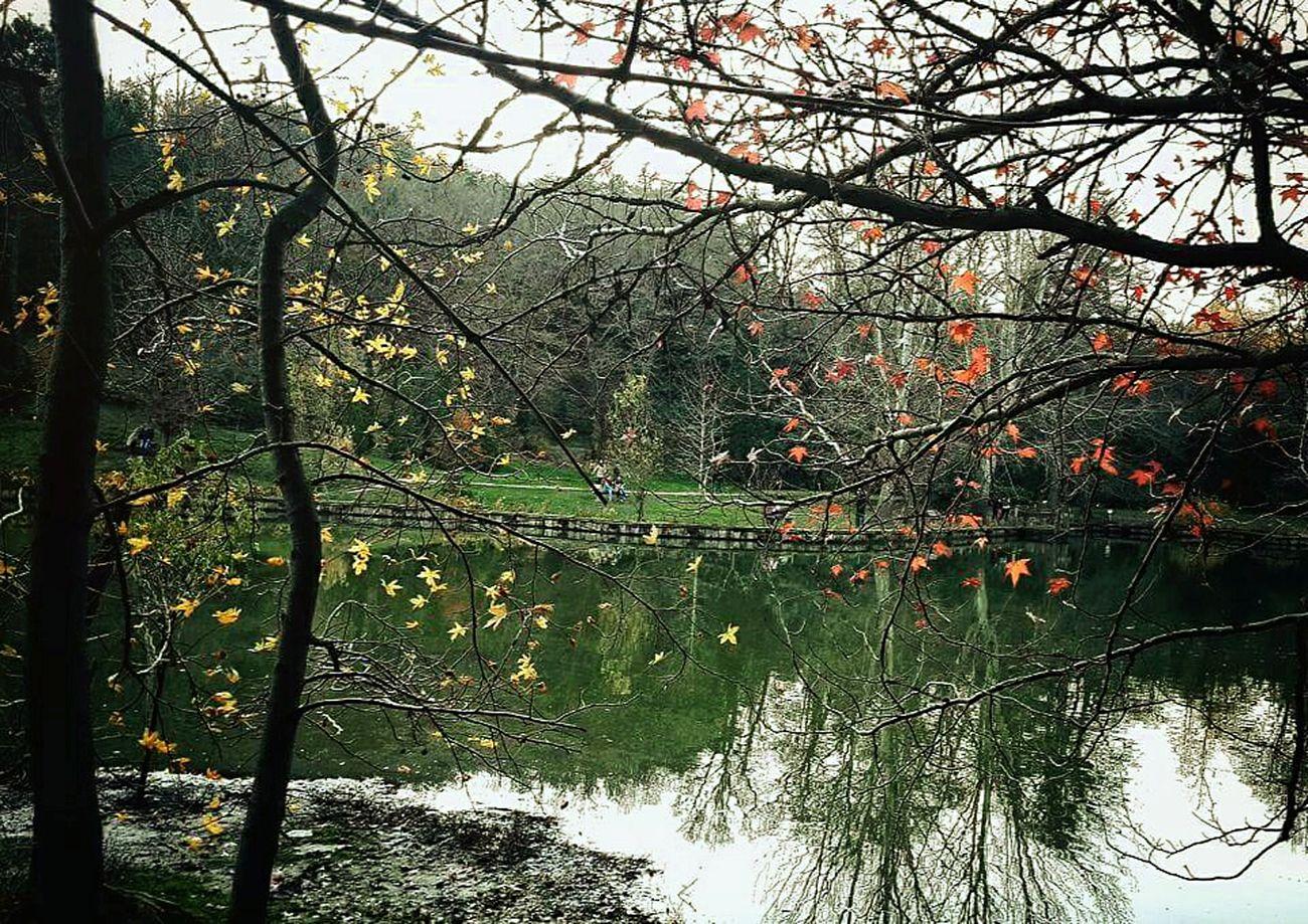 Turkey Istanbul Sarıyer Atatürk Arboretumu Temizhava Doğa Huzur Aniyakala Anıyaşa Zamanidurdur Fotografheryerde Fotograf_atolyesi Fotografdukkanim Fotografturkiye Gezdimgördüm Objektifimden 📷