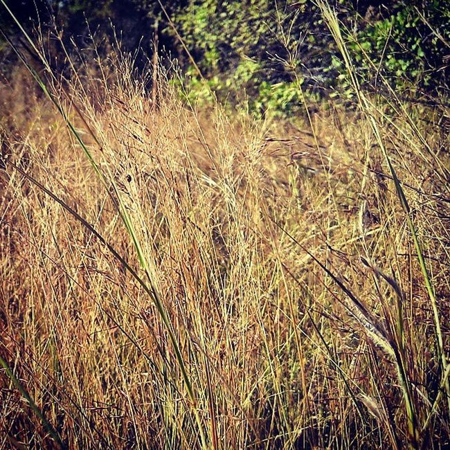 Dry Grass Dry Heart Dry Expectations Of Life Difficult Situations Hope For Happy Moments Hope For Peace