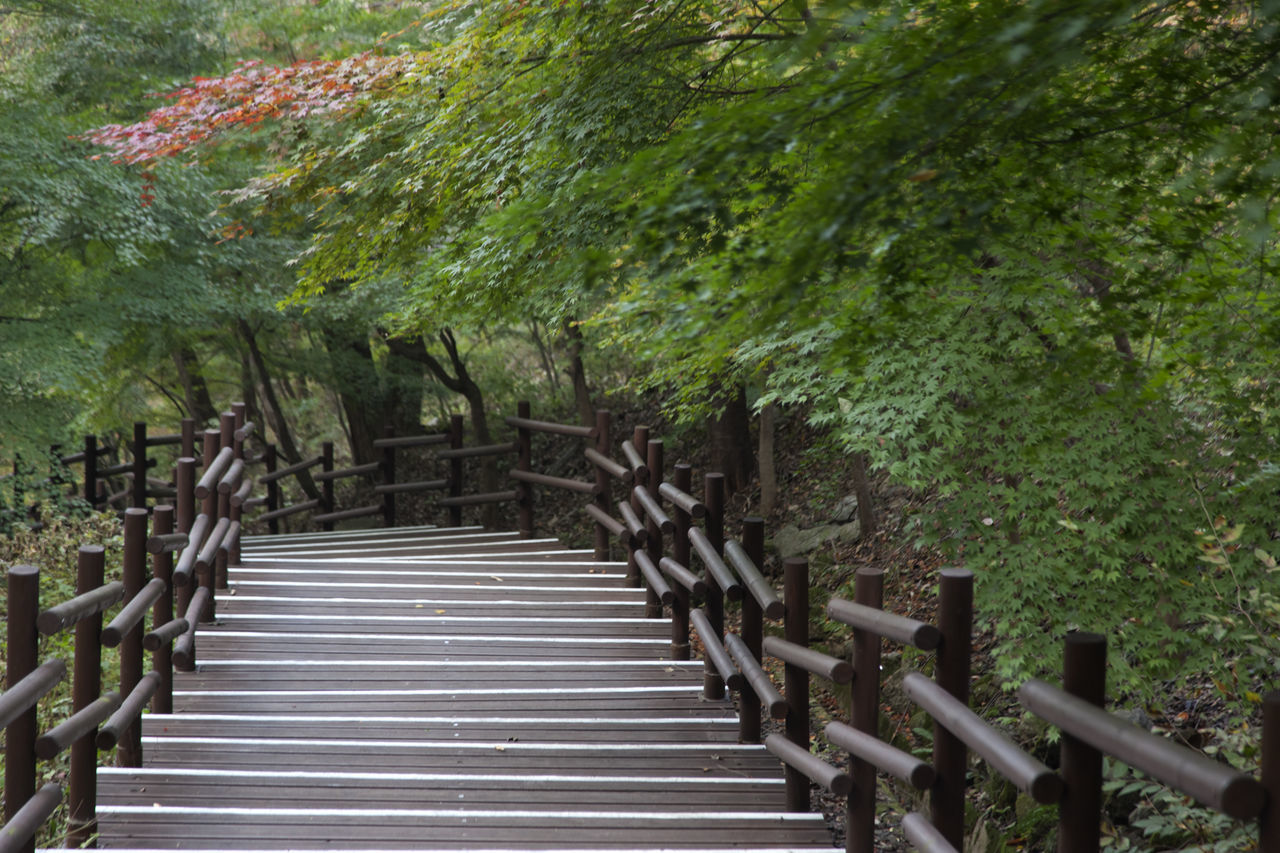 autumn in Maisan Mountain, Muan, Jeonbuk, South Korea Autumn🍁🍁🍁 Beauty In Nature Day Fall Forest Forest Photography Growth In A Row Maisan Mountain Nature No People Outdoors Railing Stairway Steps And Staircases Tranquility Tranquility Tree