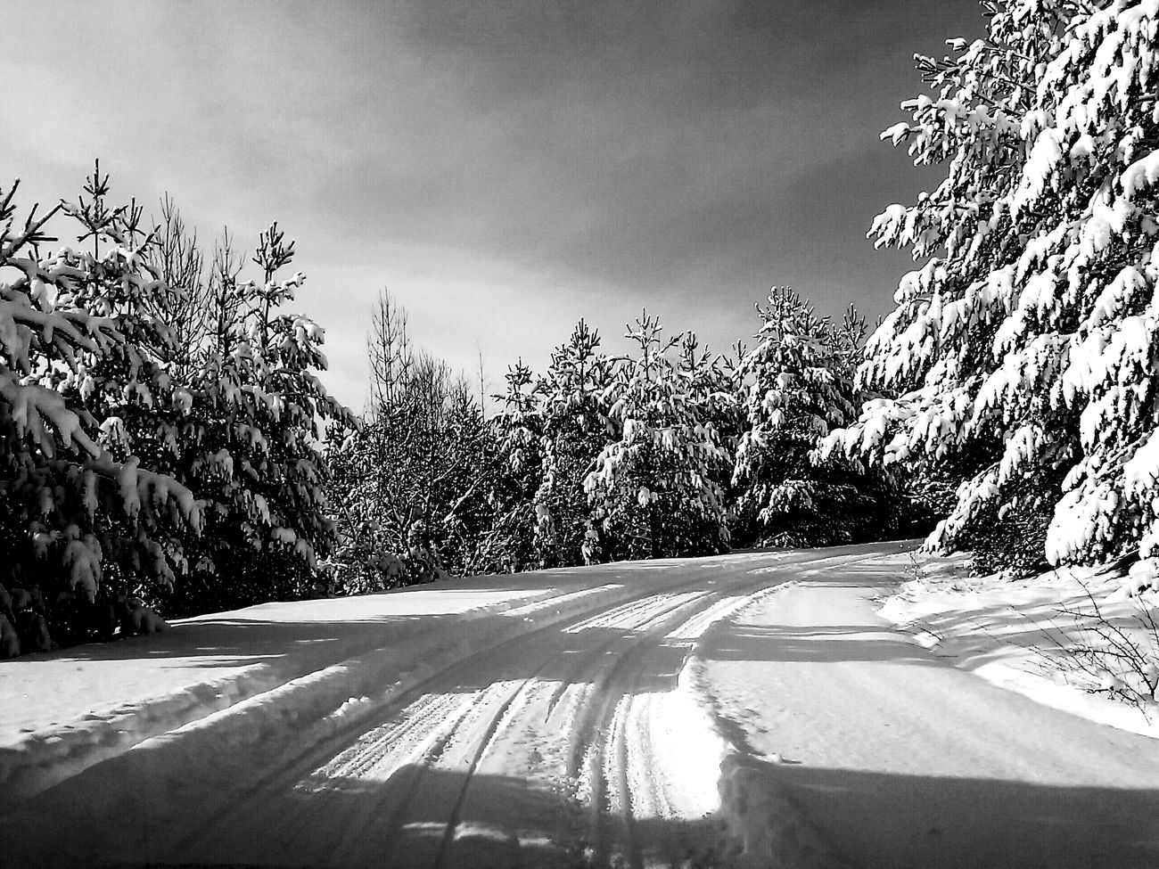 Winter, snow, black and white, macedonia, nature, white Tree No People Cloud - Sky Sky Outdoors Nature, Snow Day First Eyeem Photo