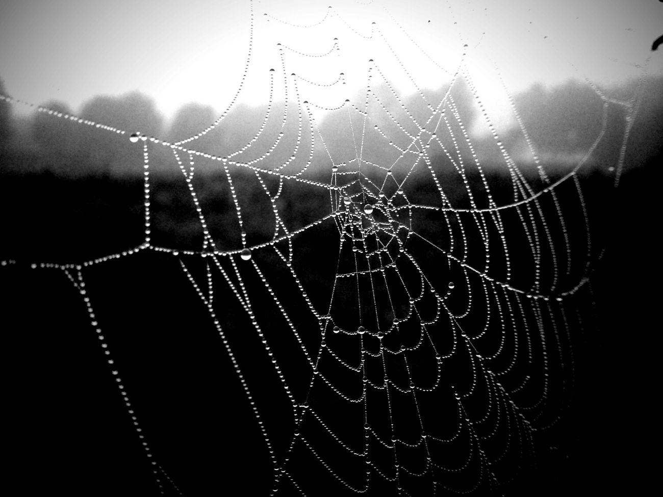 Misty morning Bw_collection Blackandwhite Monochrome EyeEm Nature Lover