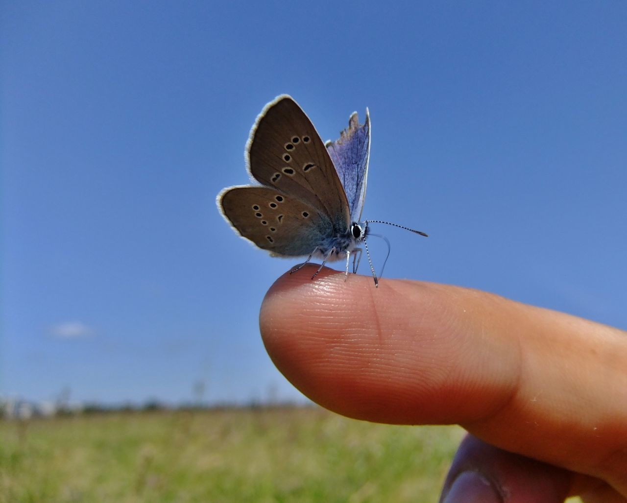 Close-Up Of Butterfly On Finger Against Clear Sky
