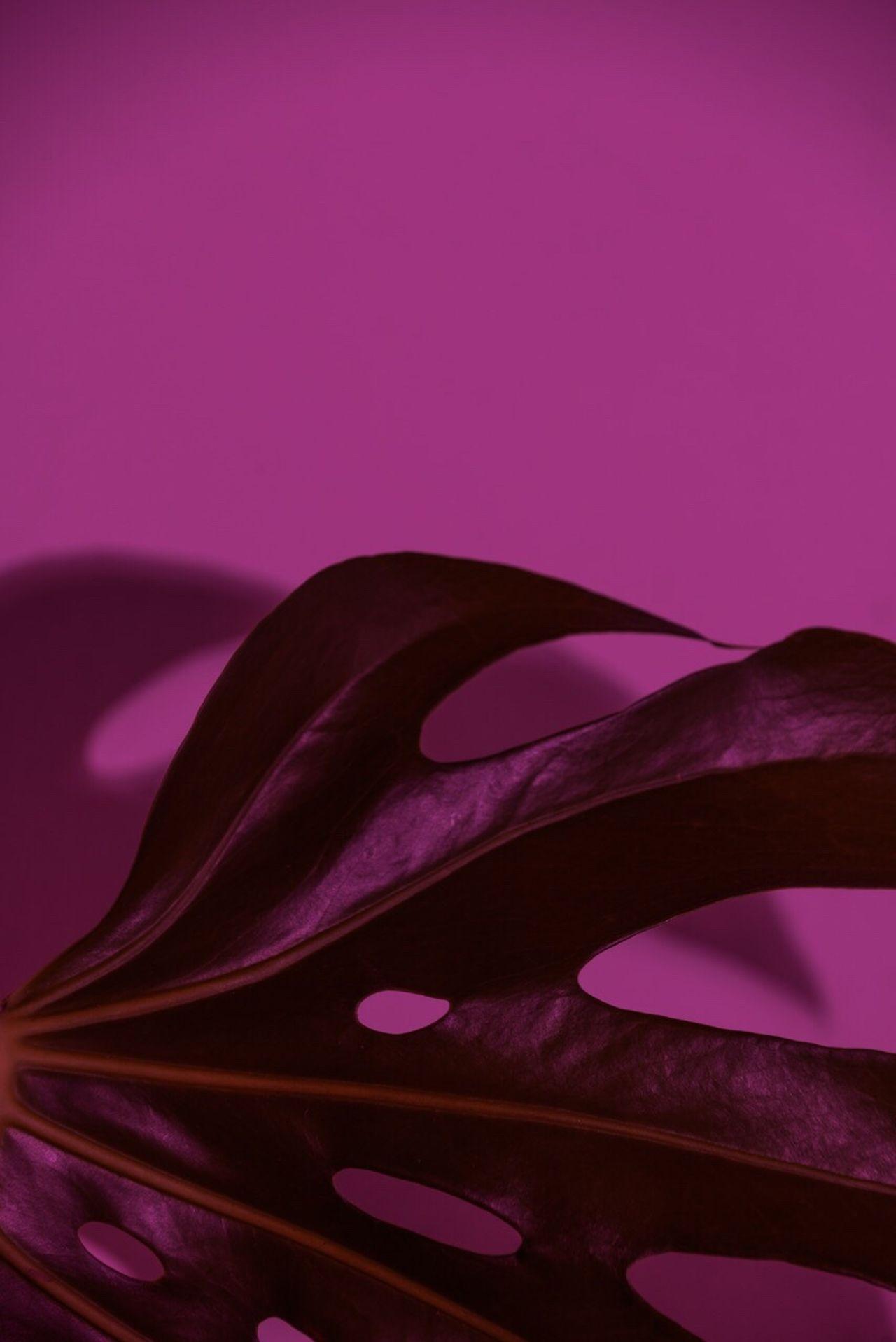 Deliciousmonster Plant Neon Lifestyle Pink
