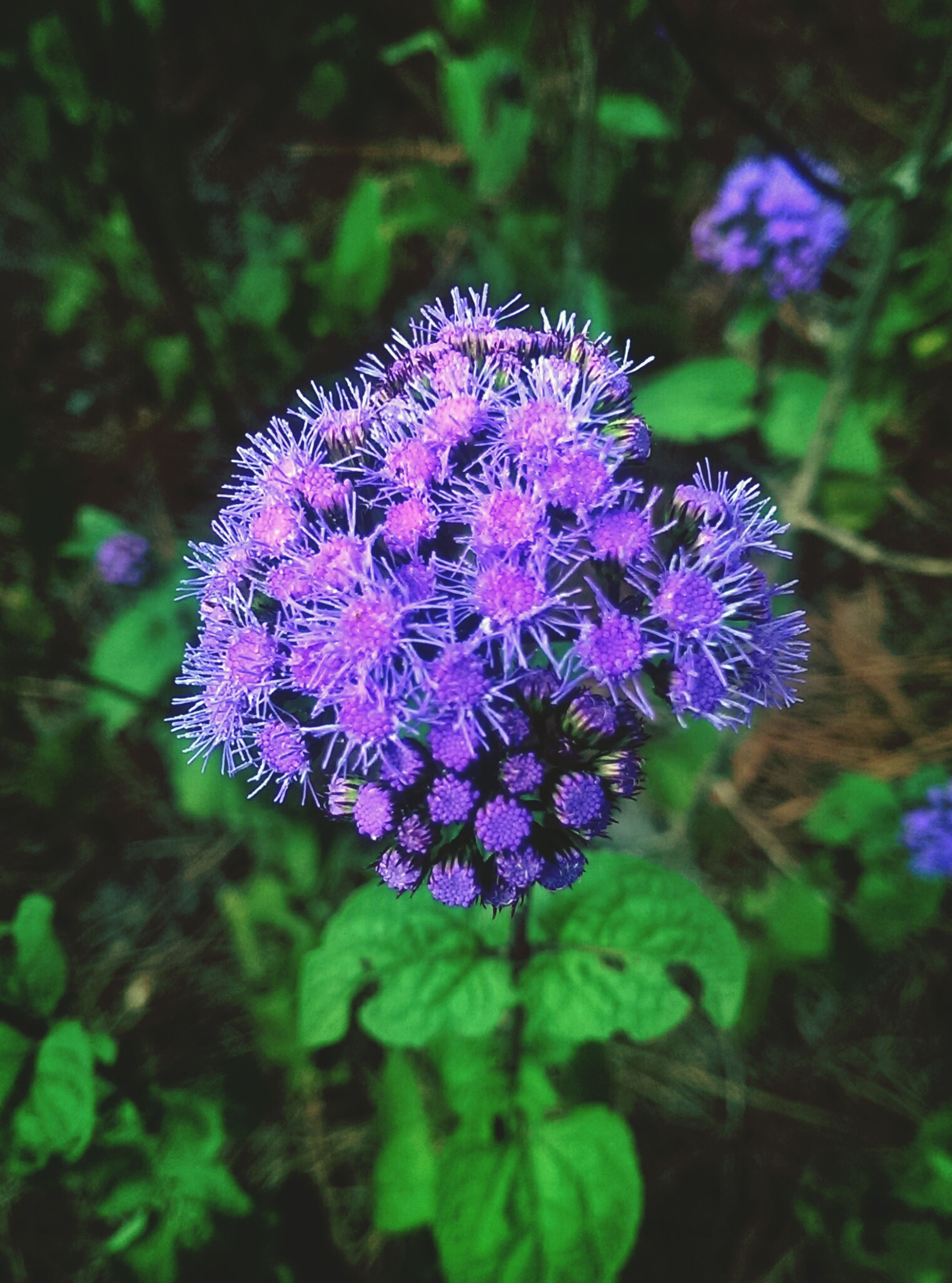 flower, freshness, purple, fragility, growth, beauty in nature, close-up, focus on foreground, petal, flower head, plant, nature, blooming, one animal, in bloom, insect, outdoors, animal themes, day, no people