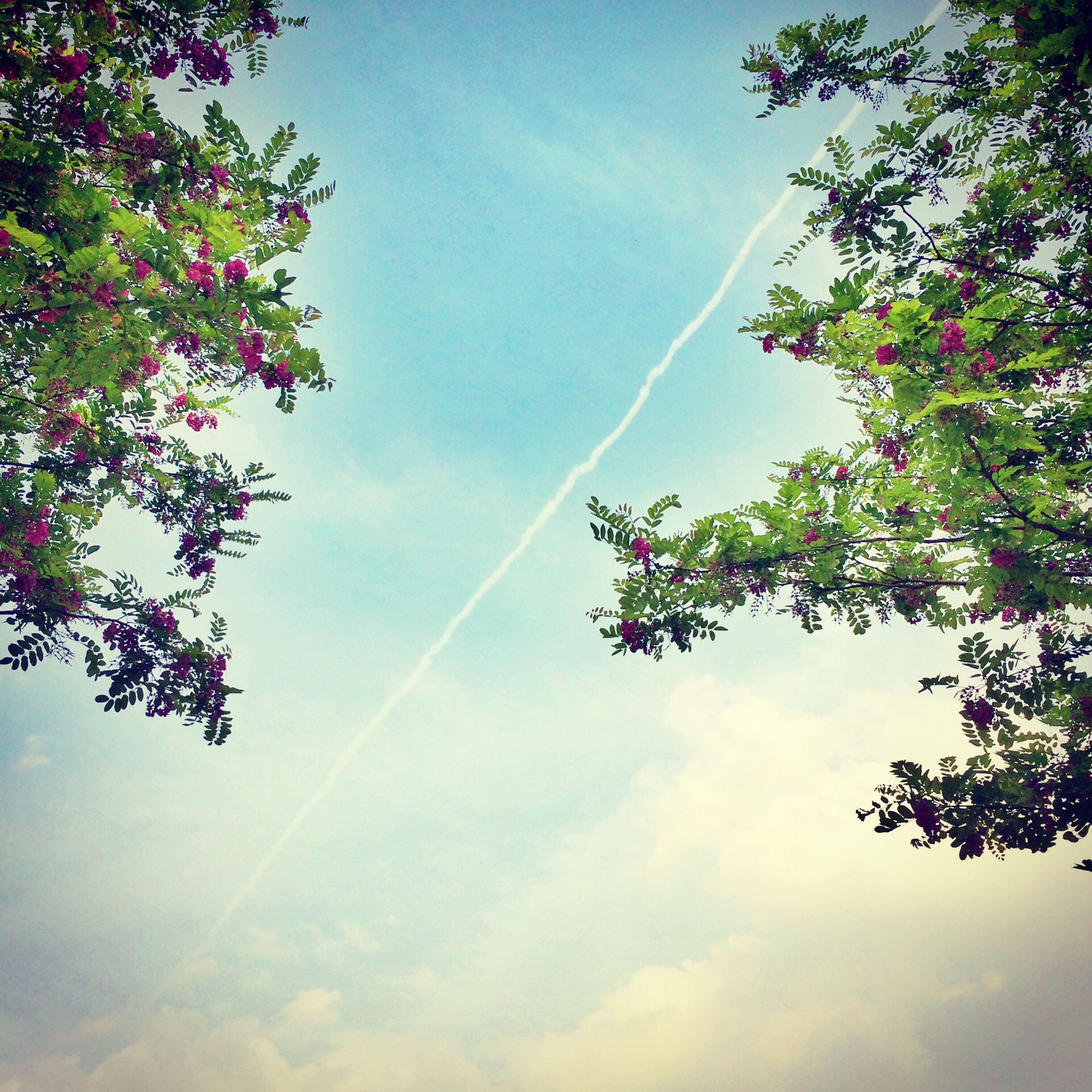low angle view, tree, sky, cloud - sky, growth, nature, beauty in nature, branch, day, cloud, tranquility, outdoors, blue, sunlight, cloudy, no people, scenics, silhouette, tranquil scene, pink color