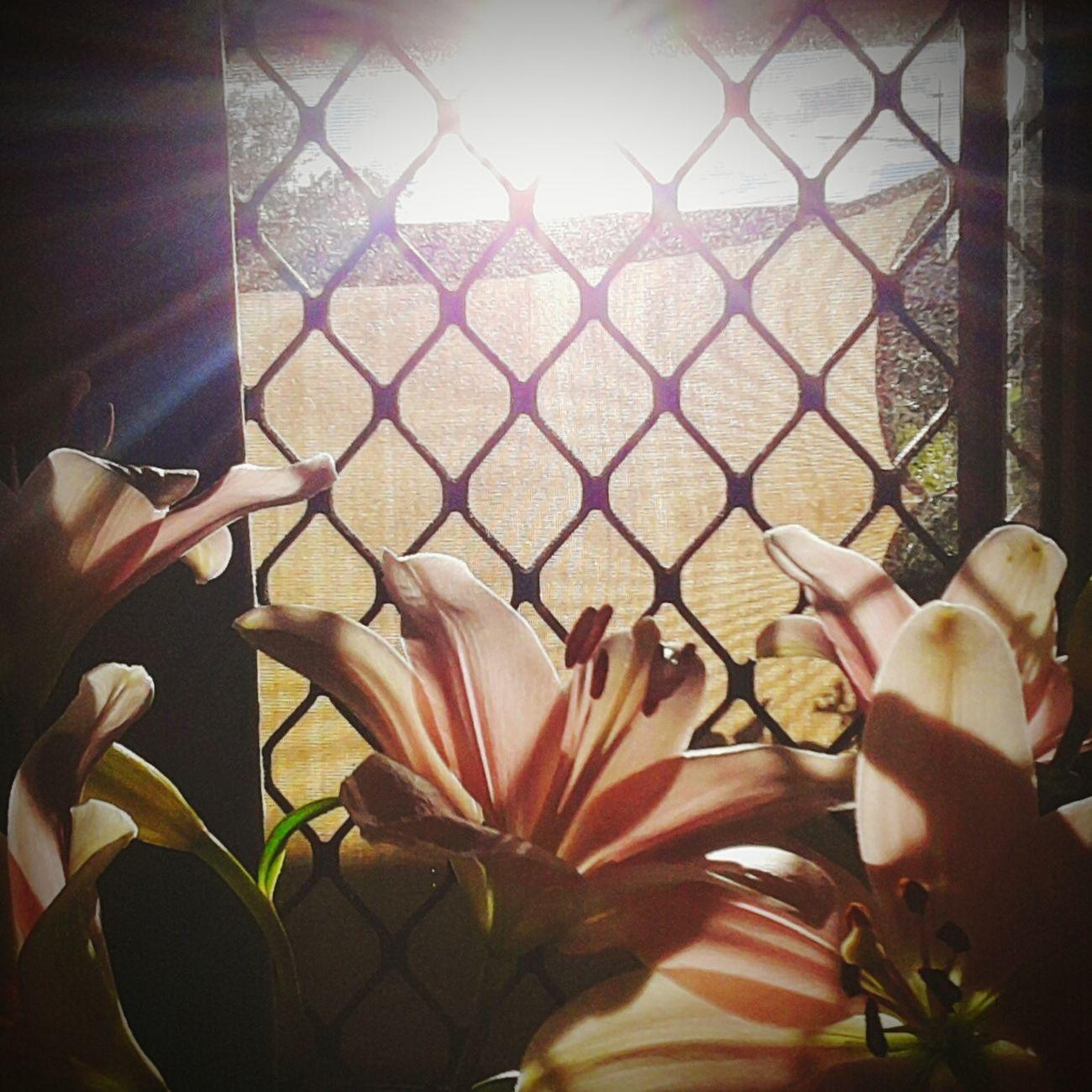 Sunrise Enjoying The View Birthday Flowers Homedecor Rays Of Light Beautyful  Nature