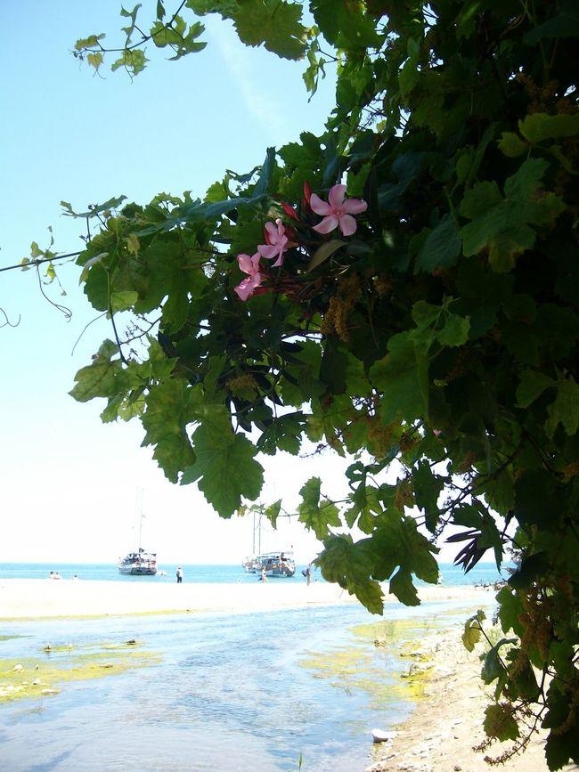 Olympos Antalya Olympos Beach Flower Ship Sea Beach Relaxing Enjoying Life Holiday Travel Photography Sailboat