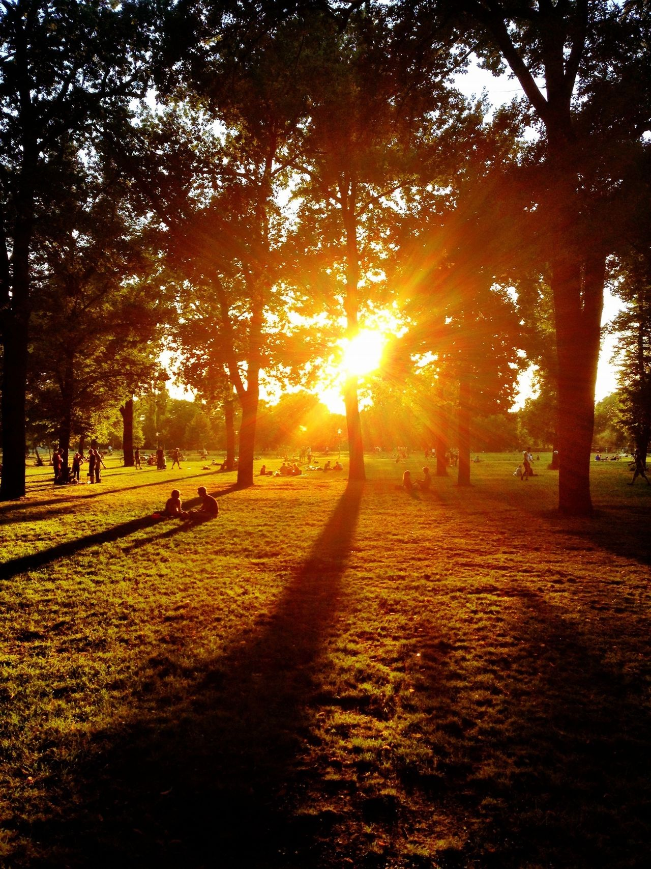 Beautiful stock photos of sun, Berlin, Bright, Germany, Grass