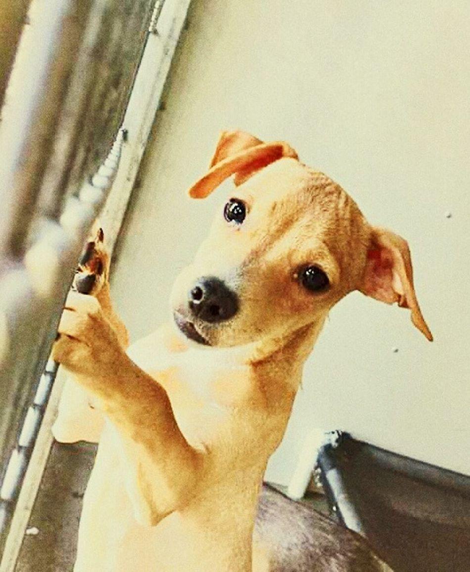 Dog Pets Shelterdogs Shelter Pup Needsomeonetolove rescue me Lockedup