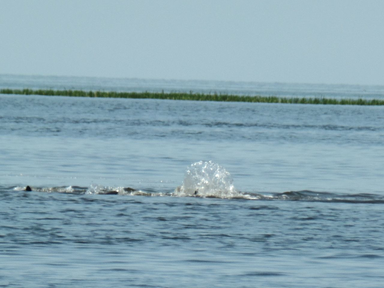 Floridaliving  Natural Beauty Naturelovers Naturephotography Yankeetown Florida Spring2016 Oceanview Checkthis Out Dolphins Playing Dolphinlover Dolphins Swimming Florida Beaches Florida Skies Mothers Day Nature Photography Eye4photography  Florida Life NiceShot Yankeetown Fl MyPics Naturelovers Eye4photography Naturephotography Florida Beautiful Day Checkmeout Floridafishing