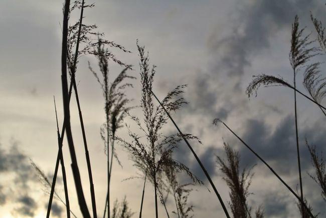 長野県 諏訪市 諏訪湖 夕暮れ Japan Nagano Suwa Lake Suwa Lake Sunset