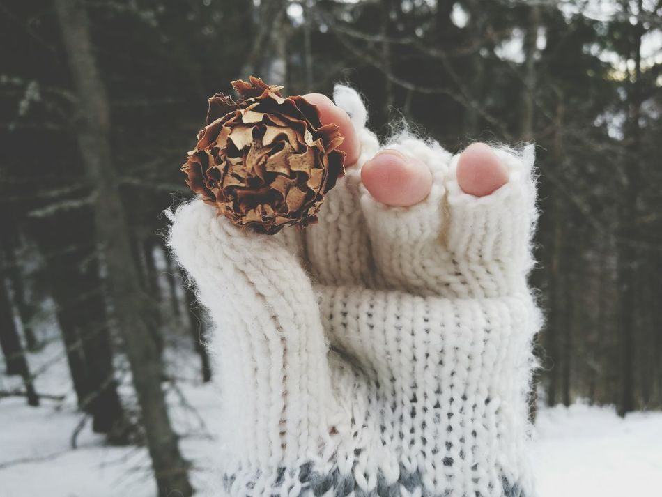 Winter Snow Cold Temperature Nature Tree Outdoors Close-up Winter Pine Cone Glove Winter Glove Warm Clothing