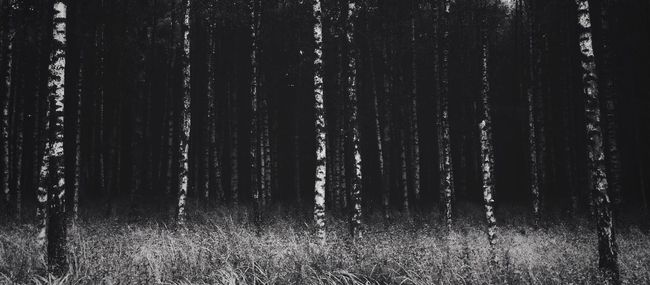 Hidden Places Birch EyeEm Best Shots Blackandwhite Showcase: January