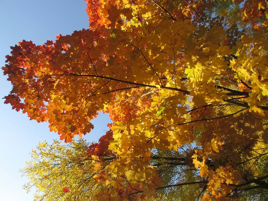 Leaves осень Autumn Colors Autumn листья Природа Nature природароссии золотаяосень Goldenautumn Goldenleaves