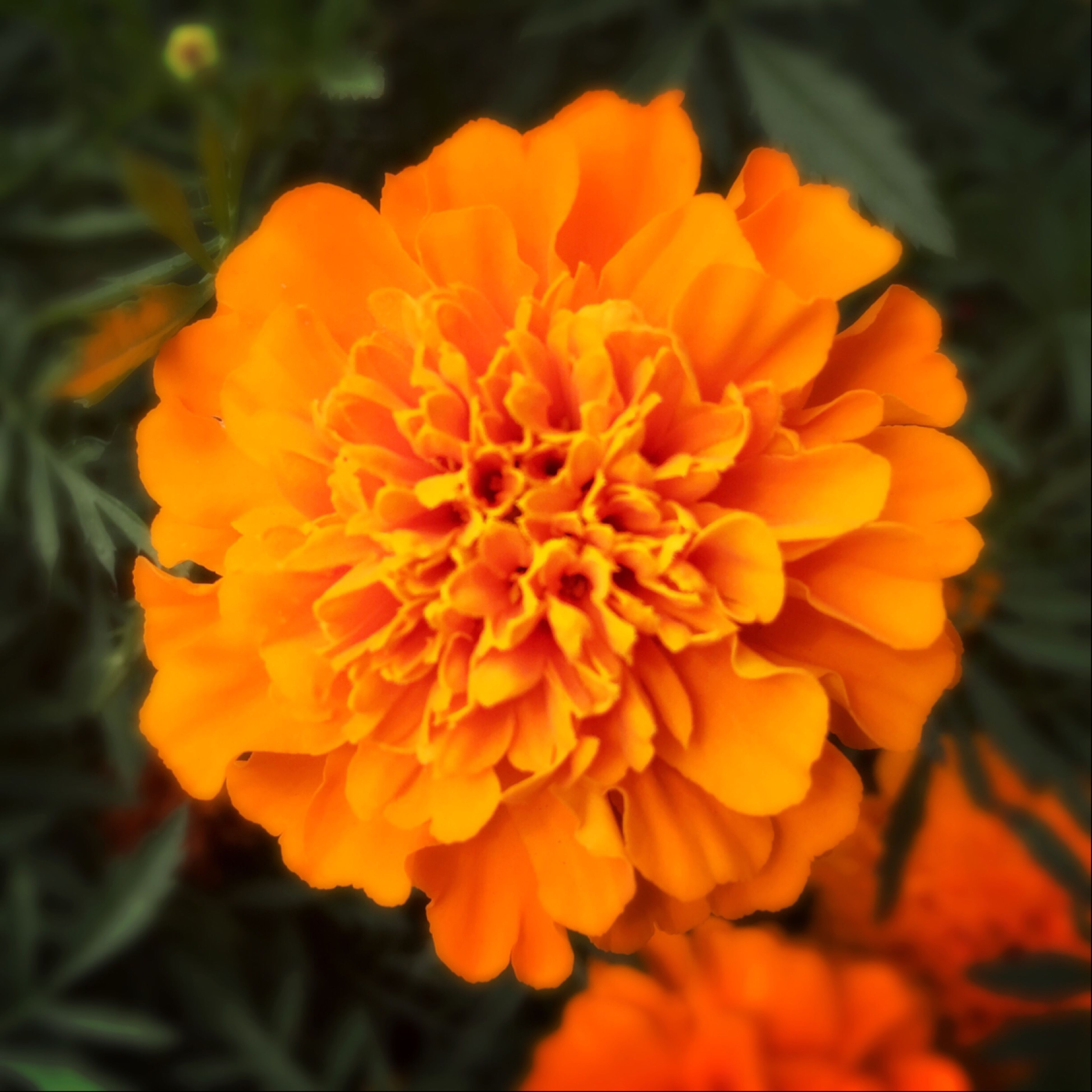 flower, petal, freshness, flower head, fragility, growth, beauty in nature, close-up, blooming, nature, yellow, orange color, focus on foreground, plant, in bloom, high angle view, single flower, blossom, outdoors, no people