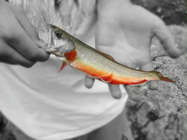 This fish was released... Fishing Fish Check This Out Brook Trout Trout Catch And Release Colorful Colorado Silverton, Colorado Colorsplash