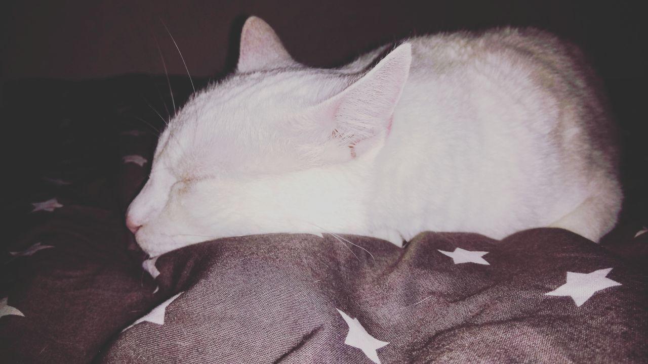 Baby 😍 Cute Pets Cute Baby Allwhiteeverything Pearlwhite Cat Cuddlebuddy Cuddle Takeanap Berlin Germany