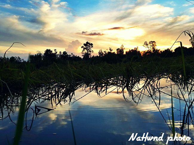landscape in thailand Landscape_Collection Landscape #Nature #photography Sunset #sun #clouds #skylovers #sky #nature Beautifulinnature Naturalbeauty Photography Landscape Thailand_allshots
