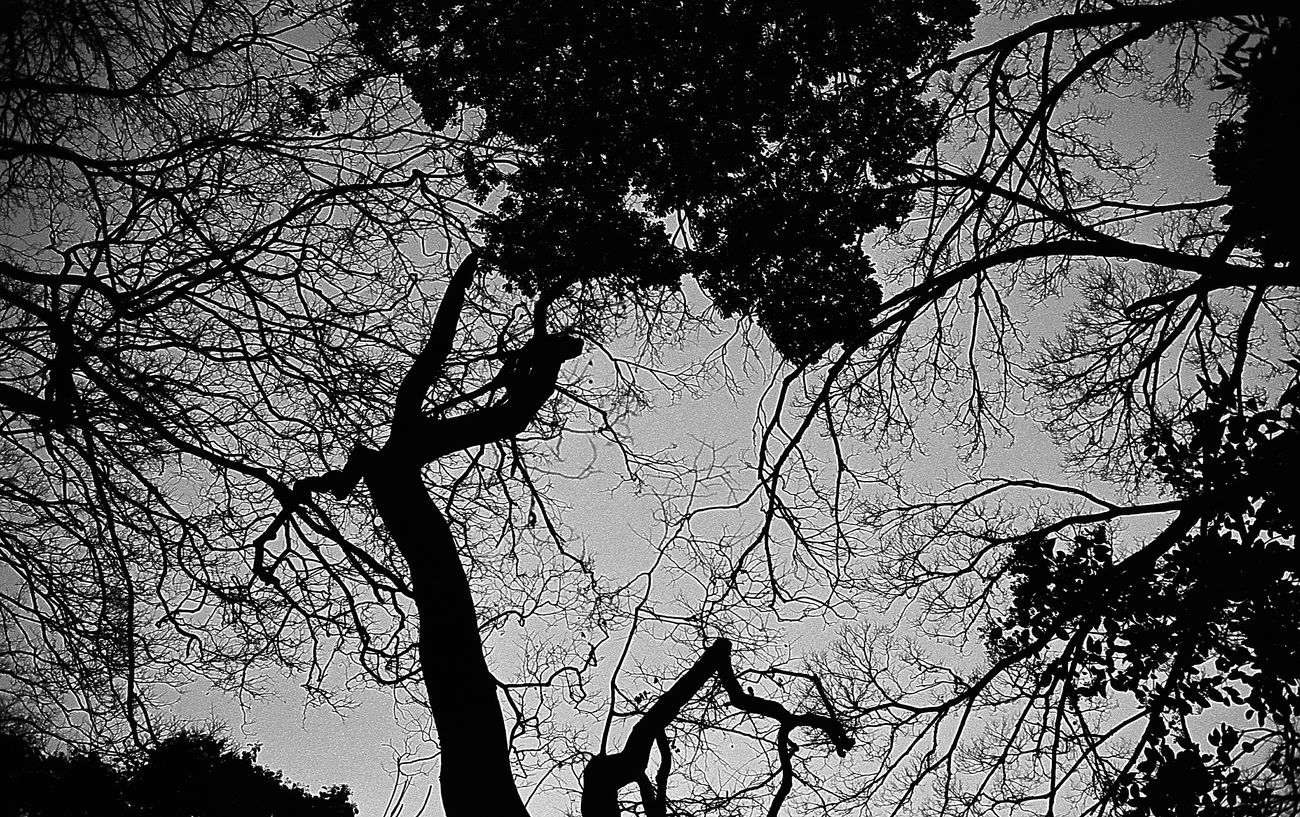 Tree Nature Sky Beauty In Nature Day Film Photography Life Black And White Blackandwhite Photography Snapshots Of Life Film Filmcamera Black And White Photography Monochrome Black & White Snap Bnw Leica Black And White Silhouette Nature Beauty In Nature Tree