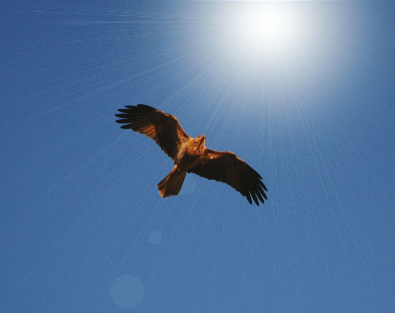 Beautiful stock photos of hawks, Animal Themes, Animals In The Wild, Bird, Clear Sky