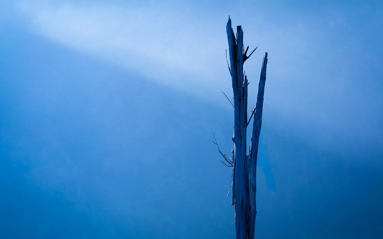Outdoors Day Blue Low Angle View No People Clear Sky Sky Winter Nature Bark Tree Wood Fog Mountain