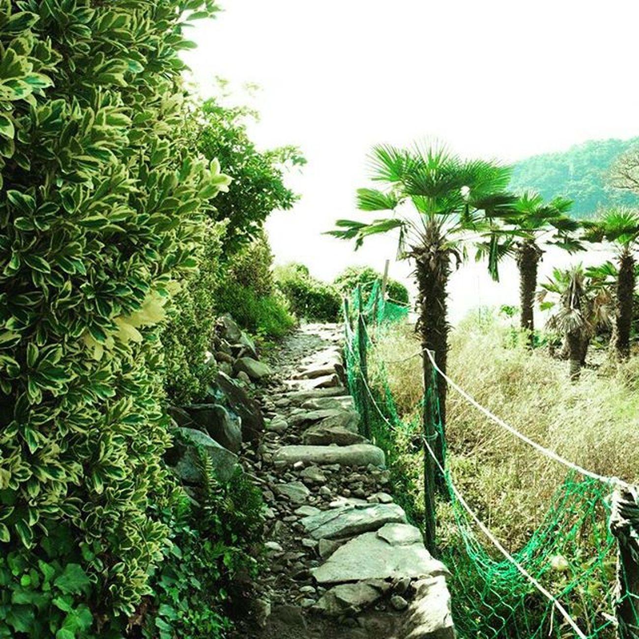 공곶이 Koreanisland Geojeisland 거제도 Green Travel Island