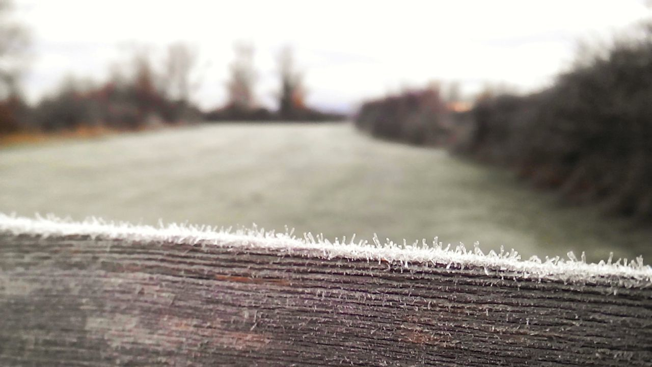 Fría mañana de sábado Close-up Cold Temperature Day Nature Outdoors Winter No People Waiting Game Cold Days Frozen Frozen Nature StreamzooVille LeonEsp  Españoles Y Sus Fotos Telling Stories Differently Streamzoofamily Streamzoo Family