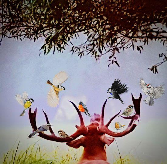 Nature Animals In The Wild Beauty In Nature Fragility EyeEmBestEdits EyeEm Selects EyeEm Masterclass Firsteyeemphoto☺ EyeEm Best Shots EyeEm Gallery First Eyeem Photo Trucage Retouched Photo Retouching Retouched Shot