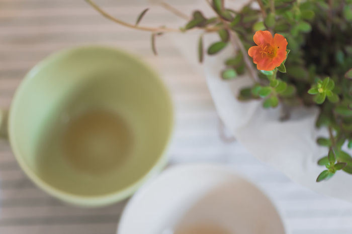 Breakfast Lifestyle Morning Morning Light Plant Tea Bowl Close-up Cups Flower Food And Drink Freshness Growth Healthy Healthy Eating Healthy Food Healthy Lifestyle High Angle View Indoors  Leaf Lifestyles Nature No People Plant Table