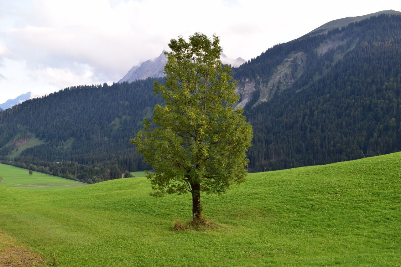 tree, beauty in nature, green color, nature, tranquil scene, tranquility, scenics, growth, mountain, landscape, grass, day, field, no people, outdoors, sky, mountain range, plant