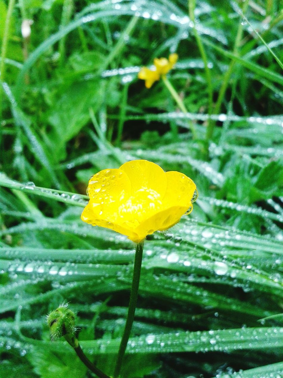 Rainy Days Flower Relaxing