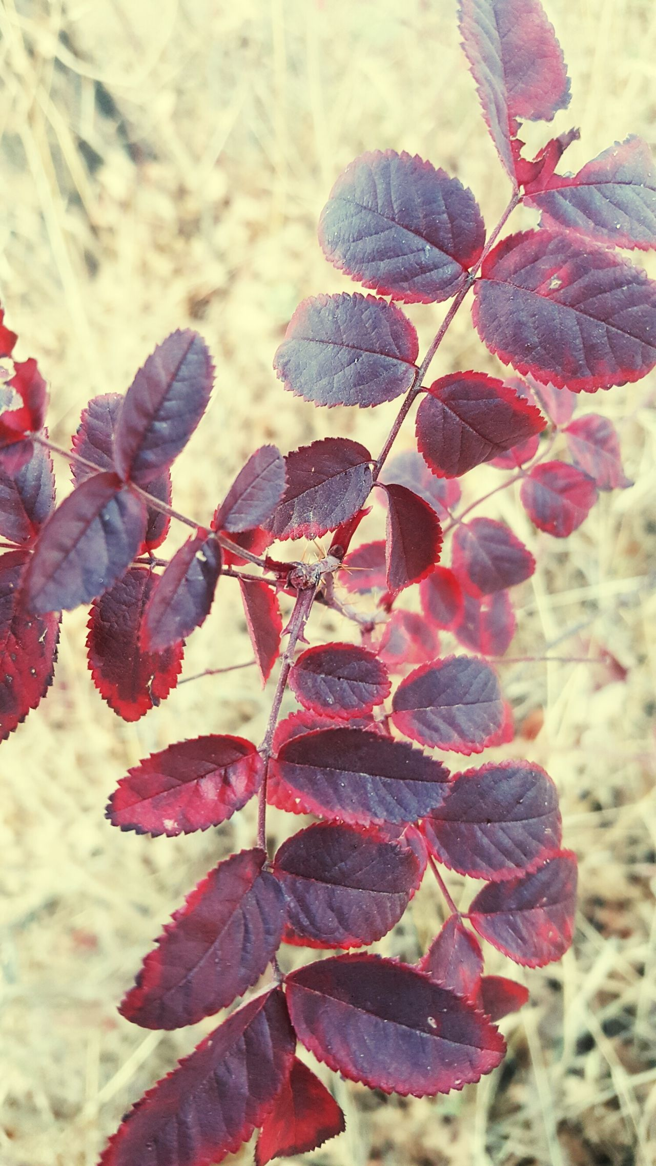 Beauty In Nature Nature Outdoors Creekside Trail Landscape Autumn Red Tree Branch Leaf Growth Plant Freshness Maroon