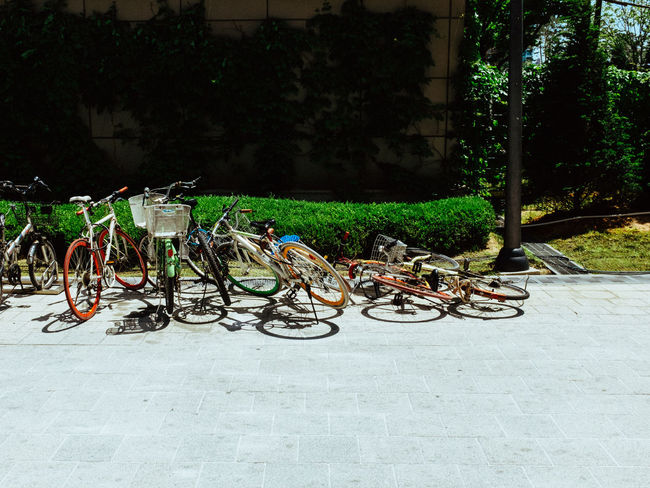 Bicycle Bicycle Rack Day Nature No People Outdoors Stationary Transportation Tree