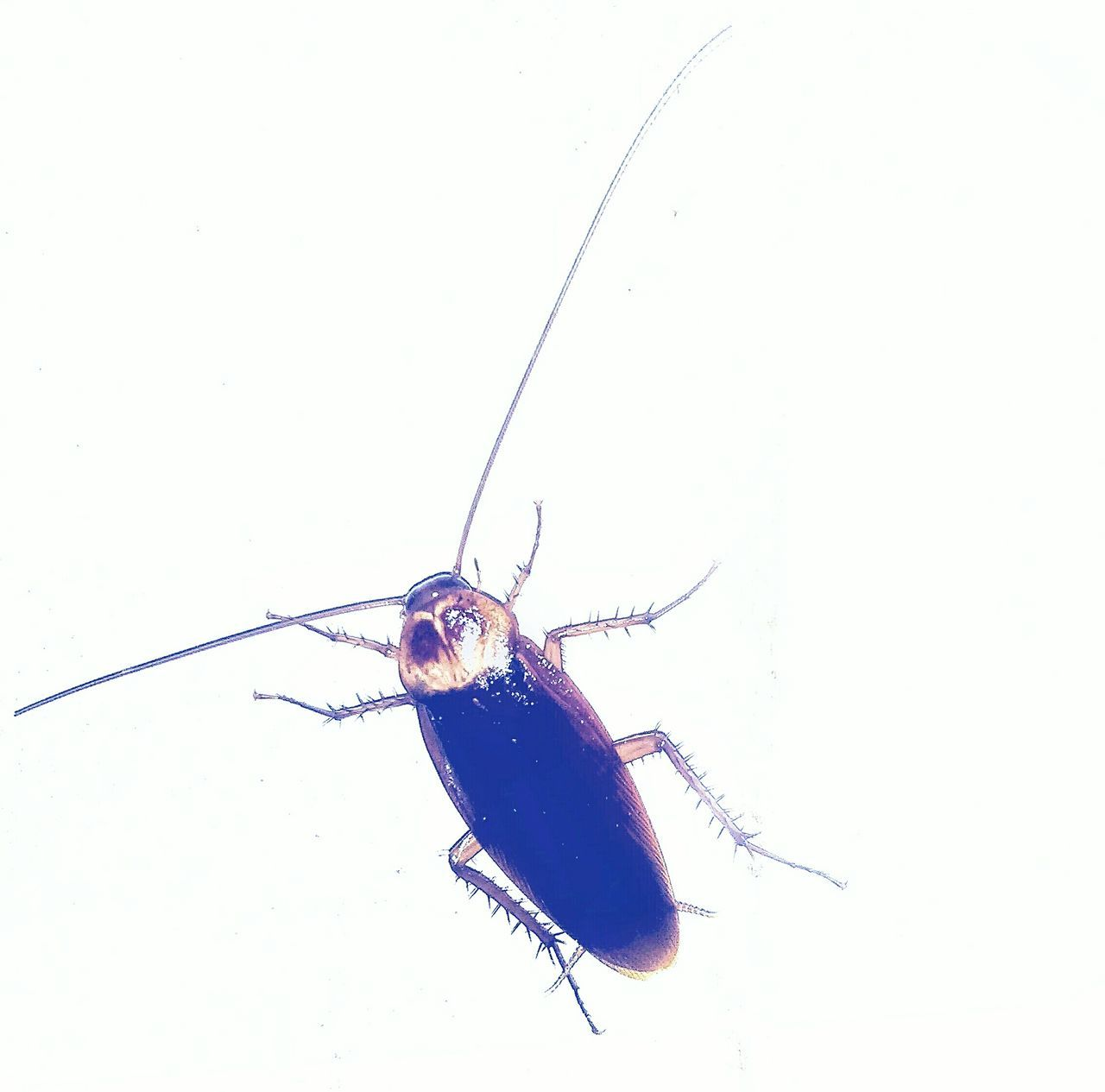 Beautiful stock photos of cockroach, Animal Themes, Animal Wildlife, Animals In The Wild, Bangalore
