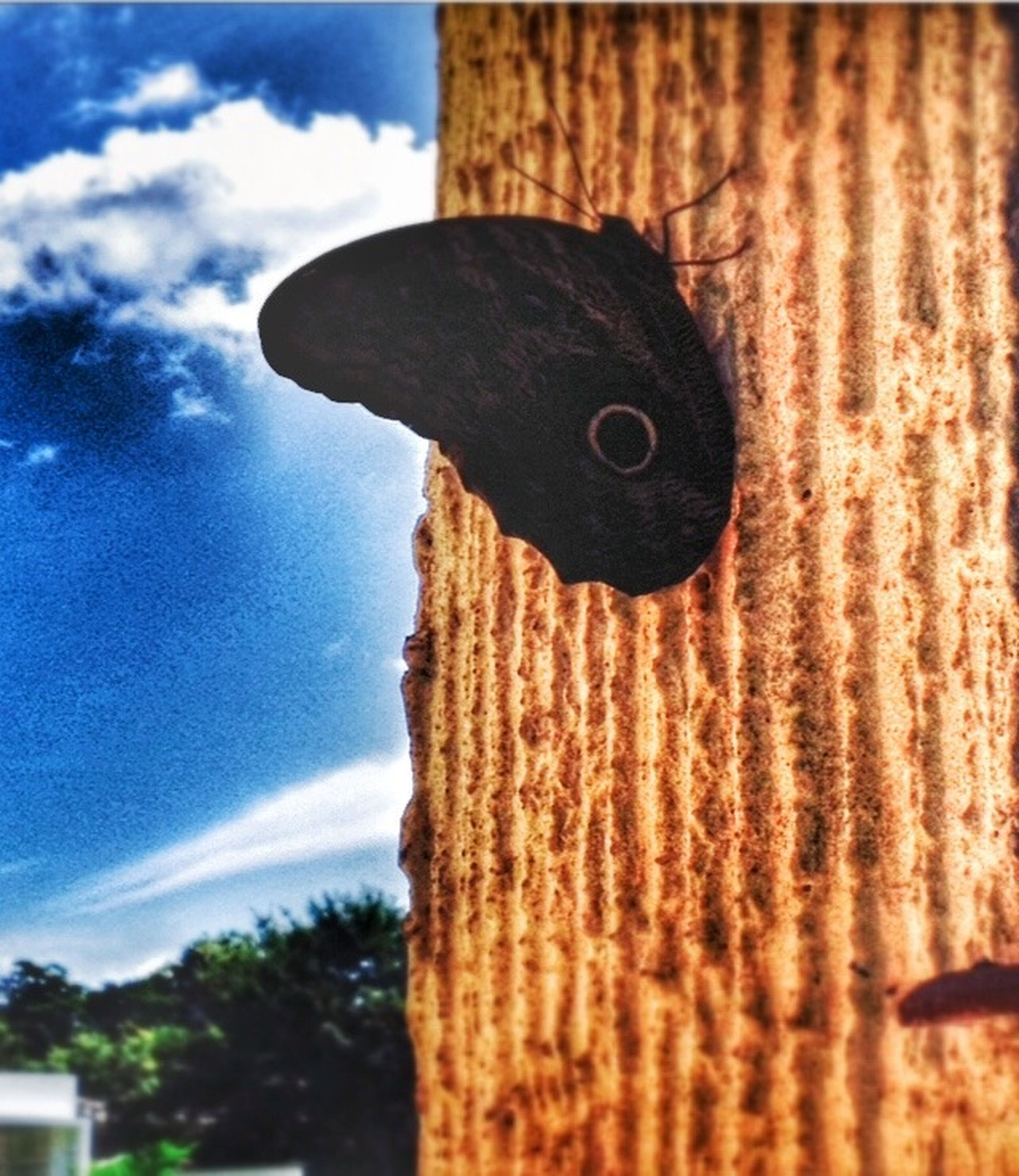 sky, focus on foreground, close-up, low angle view, wood - material, cloud - sky, cloud, blue, built structure, outdoors, building exterior, tree, one animal, day, pole, wooden, selective focus, architecture, nature, part of